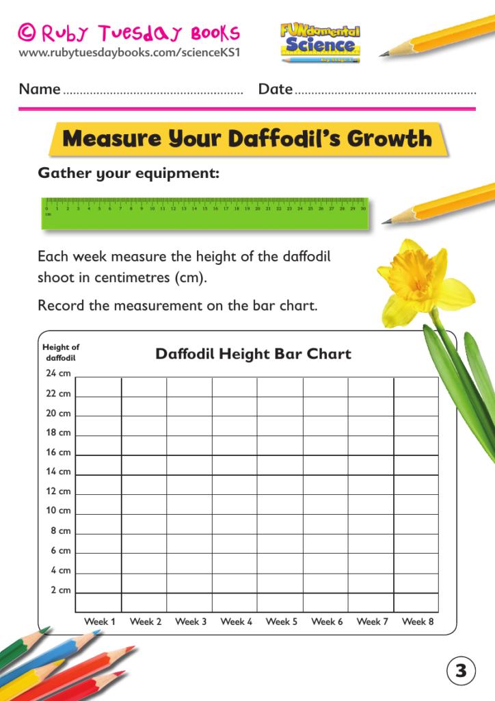 Ks1 Science: Plants   Grow A Daffodil Bulb Inside Multiplication Worksheets Ks1 Tes